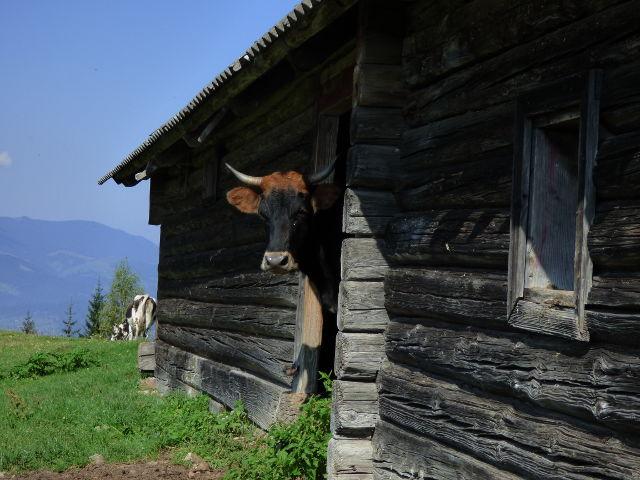 Expedice_woodcraft_Ukrajina_dobrodruzna_dovolena_21